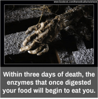Memes, 🤖, and Enzyme: www.facebook.com/themedicalfactsdotcom  Within three days of death, the  enzymes that once digested  your food will begin to eat you.