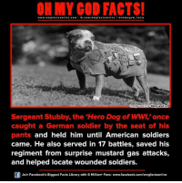 Pantsings: www.om facts online.com I fb.com  /omg facts on  a oh my god facts  blog.ww.ca  mage Source  Sergeant Stubby, the Hero Dog of WW,'once  caught a German soldier by the seat of his  pants and held him until American soldiers  came. He also served in 17 battles, saved his  regiment from surprise mustard gas attacks,  and helped locate wounded soldiers  Join Facebook's Biggest Facts Library with 6 Million+ Fans- www.facebook.com/omgfactsonline