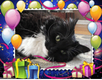Happy 9th Birthday Twilight! @twilightthecatnj Hope you are having a great day full of tuna, treats, toys and cuddles!! 🎉🎈🎁🎂🎉: wWW.Photofram.e Happy 9th Birthday Twilight! @twilightthecatnj Hope you are having a great day full of tuna, treats, toys and cuddles!! 🎉🎈🎁🎂🎉
