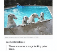 www.pinterest.com/pin 429882726908932737/  seethestarsablaze:  Those are some strange looking polar  bears. me irl