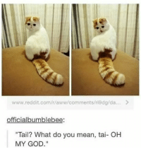 R Aww: www.reddit.com/r/aww/comments/ri9dg/da...>  officialbumblebee:  Tail? What do you mean, tai- OH  MY GOD.