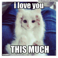 wwwfacebook.com/cat addicts  i love you  THIS MUCH  cataddictsanony-mouse Happy Valentine's Day!!