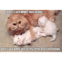 Cats, Funny, and Love: Odon't care WHAT they broke  Dont vou DARE vellat mylittle marshmallows. 😍 double tap ! Tag 3 people who love or hate cats 😭😩