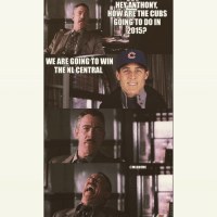 Anthony Rizzo said the Cubs are winning the NL Central in 2015: HEY ANTHONY  HOW ARE THE CUBS  GOING TO DOIN  2015a  WE ARE GOING TO WIN  THE NL CENTRAL  CMLBMEME Anthony Rizzo said the Cubs are winning the NL Central in 2015