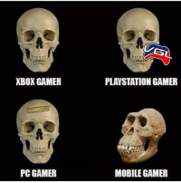 • 😂WHAT TYPE OF GAMER ARE YOU😂 👍🏼DOUBLE TAP ON YOUR CONSOLE👍🏼 👥TAG A GAMER👥 . . . . . gamers videogames xbox ps4 COD battlefield bo3 pcgaming gamergirl gamerguy sony microsoft art pokemongo gfuel astros twitch youtube elgato steam stream scuf destiny like4like memes lol l4l gaming lmao f4f: XBOX GAMER  PC GAMER  SL  PLAYSTATION GAMER  MOBILE GAMER • 😂WHAT TYPE OF GAMER ARE YOU😂 👍🏼DOUBLE TAP ON YOUR CONSOLE👍🏼 👥TAG A GAMER👥 . . . . . gamers videogames xbox ps4 COD battlefield bo3 pcgaming gamergirl gamerguy sony microsoft art pokemongo gfuel astros twitch youtube elgato steam stream scuf destiny like4like memes lol l4l gaming lmao f4f