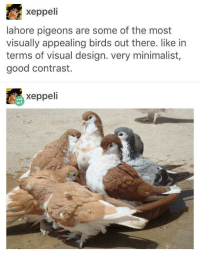 "Beautiful, Birds, and Good: xeppeli  lahore pigeons are some of the most  visually appealing birds out there. like in  terms of visual design. very minimalist,  good contrast.  xeppeli <p>Beautiful birb via /r/wholesomememes <a href=""https://ift.tt/2FPLxQf"">https://ift.tt/2FPLxQf</a></p>"