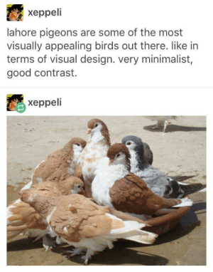 Beautiful, Birds, and Good: xeppeli  lahore pigeons are some of the most  visually appealing birds out there. like in  terms of visual design. very minimalist,  good contrast.  xeppeli Beautiful birb