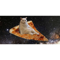 At work. Tired. Cold. Want to go home. Pizza cat is helping.: At work. Tired. Cold. Want to go home. Pizza cat is helping.