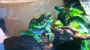 Friends, Tumblr, and Blog: xtickyfrogectumbh.com verdigrisvagabond:  stickyfrogs: Tiny's hand-taxi has arrived, he will get on politely!  GUMBY WILL COME TOO Me whenever my friends make plans.