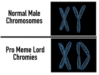 Meme, Pro, and Page: XY  X0  Normal Male  Chromosomes  Pro Meme Lord  Chromies <p>When you host a pro meme page</p>