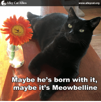 Either way, we think Office Cat Oliver looks fabulous! #LOLcats: y Alley Cat Allies  www.alleycat.org  Maybe he's born with it,  maybe it's Meowbelline Either way, we think Office Cat Oliver looks fabulous! #LOLcats