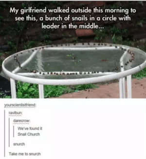 Church, The Middle, and Girlfriend: y girlfriend walked outside this morning to  see this, a bunch of snails in a circle with  leader in the middle.  yourscientistfriend:  ravibun:  darecrow:  We've found it  Snail Church  snurch  Take me to snurch Ill worship like a snail at the shrine of your lies