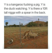 Fucking, Duck, and Girl Memes: Y is a kangaroo fucking a pig. Y is  the duck watching. Y is there a 10ft  tall nigga with a spear in the back. the more you look at this picture the more questions you have lmaoo