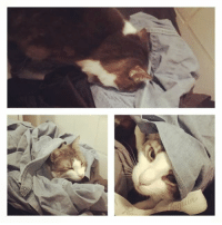 Laundry, Memes, and 🤖: Y Maxwell loves to dig and burrow into dirty laundry.