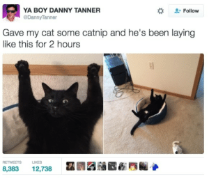 Black is back: YA BOY DANNY TANNER  @DannyTanner  Follow  Gave my cat some catnip and he's been laying  like this for 2 hours  RETWEETS  LIKES  8,383  12,738 Black is back