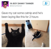 Memes, Been, and Boy: YA BOY DANNY TANNER  @DannyTanner  Gave my cat some catnip and he's  been laying like this for 2 hours  のの