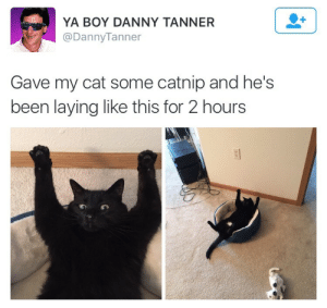 Been, Boy, and Cat: YA BOY DANNY TANNER  @DannyTanner  Gave my cat some catnip and he's  been laying like this for 2 hours  のの