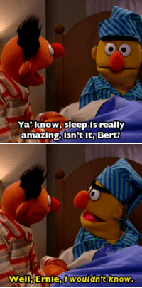 Food, Target, and Tumblr: Ya' know, sleep is really  amazing, isn't it, Bert?   Well, Ernie, wouldn't knovw will-write-for-food: look me in the eye and tell me they aren't a couple