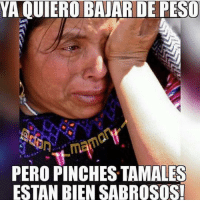 Memes, 🤖, and Tamales: YA QUIEROBAJAR DE PESO  PERO PINCHES TAMALES  ESTAN BIEN SABROSOS! 😂😂😂 MexicansProblemas Via @don__mamon__