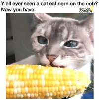 Memes, 🤖, and Corn: Y'all ever seen a cat eat corn on the cob?  Now you have.  IG TURF  COMEDI 😹😹😹