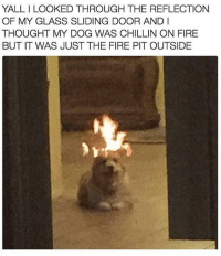 Fire, Thought, and Trendy: YALL I LOOKED THROUGH THE REFLECTION  OF MY GLASS SLIDING DOOR AND I  THOUGHT MY DOG WAS CHILLIN ON FIRE  BUT IT WAS JUST THE FIRE PIT OUTSIDE