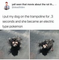 Memes, Pokemon, and Movie: yall seen that movie about the rat th...  @deadliidev  i put my dog on the trampoline for.3  seconds and she became an electric  type pokemon Y the hell arent u following @kalesaladanimals yet