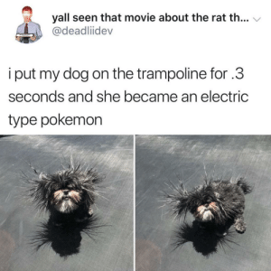 Pokemon, Good, and Movie: yall seen that movie about the rat th... V  @deadliidev  i put my dog on the trampoline for .3  seconds and she became an electric  type pokemon Anybody have a good recommendation for a trampoline?