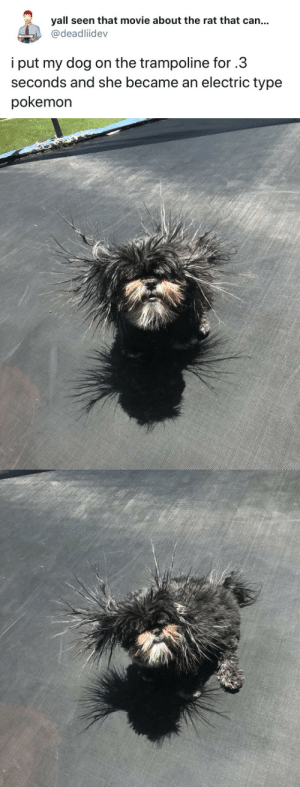 Pokemon, Tumblr, and Twitter: yall seen that movie about the rat that can...  @deadliidev  i put my dog on the trampoline for.3  seconds and she became an electric type  pokemon tastefullyoffensive:(via deadliidev)