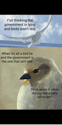 bird: Yall thinking the  government is lying  and birds aren't real  When it's all a bird lie  and the government is  the one that isn't real  Think about it, when  did you see a baby  politician?
