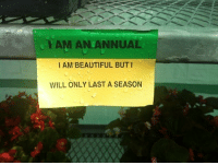 Yam: YAM AN ANNUAL  I AM BEAUTIFUL BUT1  WILL ONLY LAST A SEASON