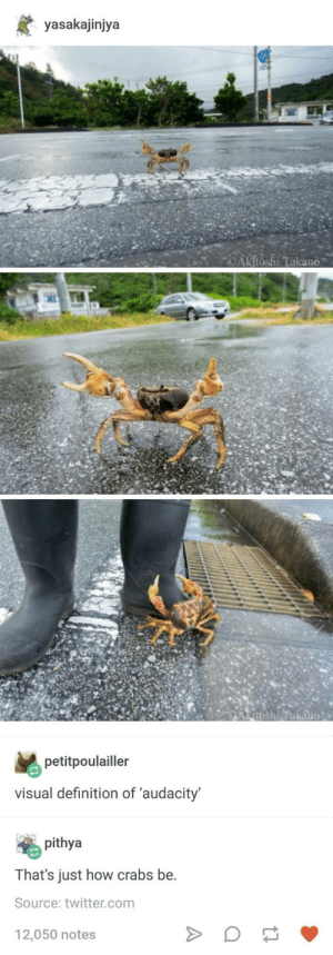 Twitter, Audacity, and Definition: yasakajinjya  Akitoshi.Takano  petitpoulailler  visual definition of 'audacity  pithya  That's just how crabs be.  Source: twitter.com  12,050 notes Crabs