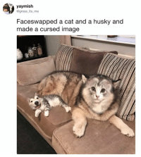 Dank, Husky, and Image: yaymish  @gross its me  Faceswapped a cat and a husky and  made a cursed image