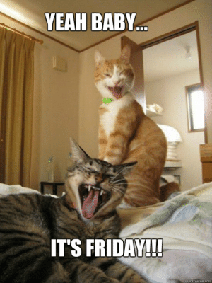 Friday Cats memes | quickmeme: YEAH BABY  ITS FRIDAY!!!  quickmeme.com Friday Cats memes | quickmeme