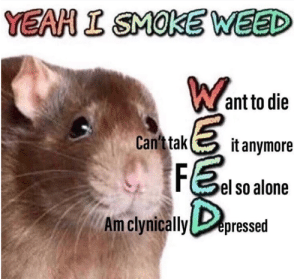 Smoke Weed: YEAH I SMOKE WEED  Want to die  Can't tak  it anymore  FE  el so alone  Am clynically epressed