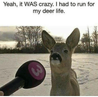 Crazyness: Yeah, it WAS crazy. I had to run for  my deer life.