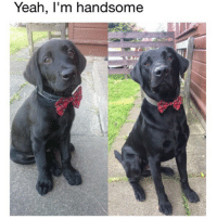 Relatable because I too wear bow ties with my birthday suit like a cot damn Chippendales Dancer DicksOutForHarambe 🤗😂😂😂 (📸: Reddit u-herwiththetwodogs): Yeah, l'm handsome Relatable because I too wear bow ties with my birthday suit like a cot damn Chippendales Dancer DicksOutForHarambe 🤗😂😂😂 (📸: Reddit u-herwiththetwodogs)