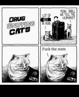 Cats, Weed, and Yeah: YEAH SHALL  WE TELL THE  HUMANS?  LOT OF  WEED  IN HERE  DRUG  SNIFFING  CATS  Fuck the state  FOLICE  FOLICE