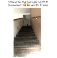 """Omg, Twitter, and Yeah: """"yeah so my dog was really excited to  see me today (wait for it)"""" omg omg do I cry or laugh via, (twitter: Dillon_Bmx)"""