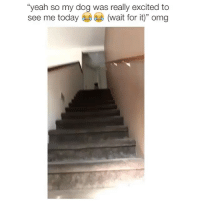 "Memes, Omg, and Yeah: ""yeah so my dog was really excited to  see me today  (wait for it)"" omg I would CRY!!"