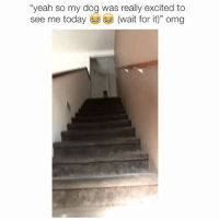 "Memes, Omg, and Yeah: ""yeah so my dog was really excited to  see me today  (wait for it)"" omg rip DM for credit"