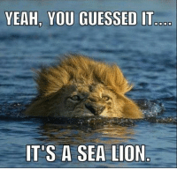Lion: YEAH, YOU GUESSED IT  ITS A SEA LION