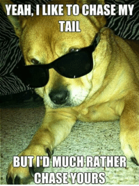 Dogs, Memes, and Yeah: YEAM, I LIKE TO CHASE MY  TAIL  BUTI'D MUCHRATHER  CHASEYOURS Yeah I like to chase my tail, but I'd rather chase yours BOL  #dog #tail