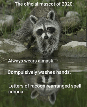 YEAR OF THE RACOON: YEAR OF THE RACOON