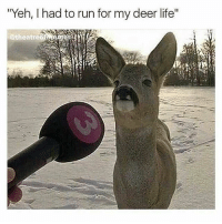 """Deer: """"Yeh, I had to run for my deer life""""  @theatr"""