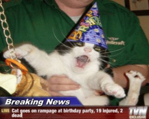 exclusive: yellaraft  Breaking News  TN  LIVE Cat goes on rampage at birthday party, 19 injured, 2  dead  EXCLUSIVE