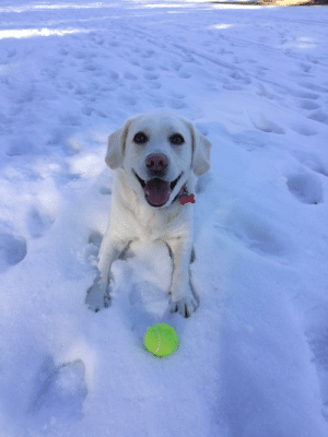 Today was her first time in the snow, I think she liked it!: YELLO Today was her first time in the snow, I think she liked it!