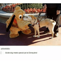 Disneyland, Memes, and 🤖: yellowkiddo:  Guide dog meets special pal at Disneyland special dog