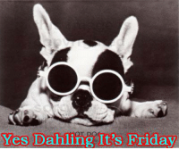 Yes Dahling, it's Friday. TGIF !    Good Morning All, have a great day      BOL  #dog: Yes Dahling It's Friday Yes Dahling, it's Friday. TGIF !    Good Morning All, have a great day      BOL  #dog