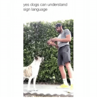 Definitely, Dogs, and Memes: yes dogs can understand  sign language I definitely learned something new today. That's amazing | @cuteandfuzzybunch