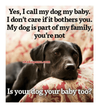 Family, Memes, and Baby: Yes, I call my dog my baby.  I don't care if it bothers you.  My dog is part of my family,  you're not  shakepaws.com  Is yourdog your baby too?